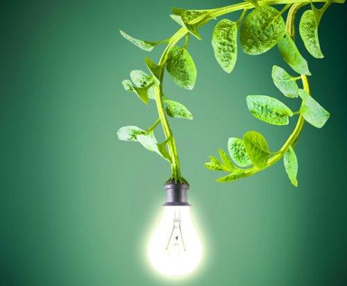 растения заряжающие энергией/3368205_20150115_3_1 (500x412, 26Kb)