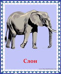 ������ слон (578x700, 316Kb)