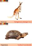 ������ кенгуру+черепаха (489x700, 190Kb)