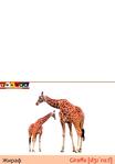 ������ кролик+жираф - копия (489x700, 117Kb)
