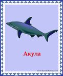 ������ акула (578x700, 246Kb)