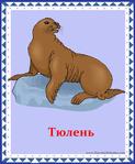 ������ тюлень (578x700, 292Kb)