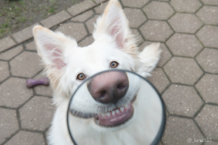 собака-улыбака-животные-собака-2065761 (700x465, 313Kb)
