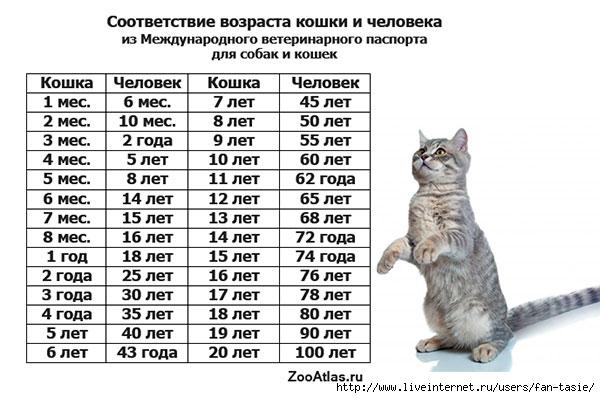 vozrast-koshki-i-cheloveka (600x398, 134Kb)