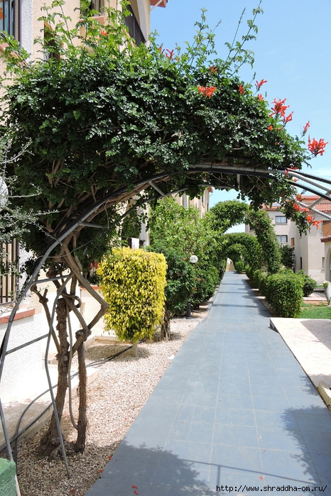 Кипр, май 2016 (137) (466x700, 375Kb)