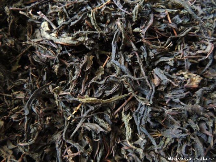 Уникальный напиток здоровья! Не пропустите время сбора и заготовки! Колорский чай/4059776_Kolorskii_chai (700x525, 225Kb)