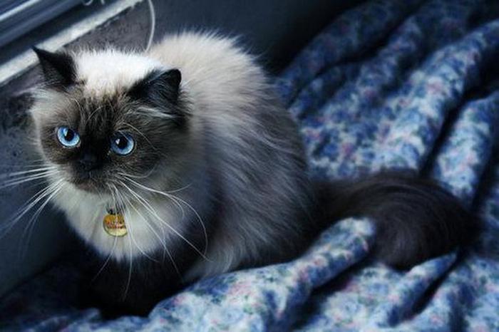 blue-eyes (700x466, 261Kb)