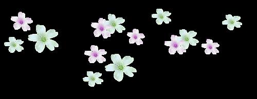 forun_eylemce_dekor_png_973 (500x193, 43Kb)