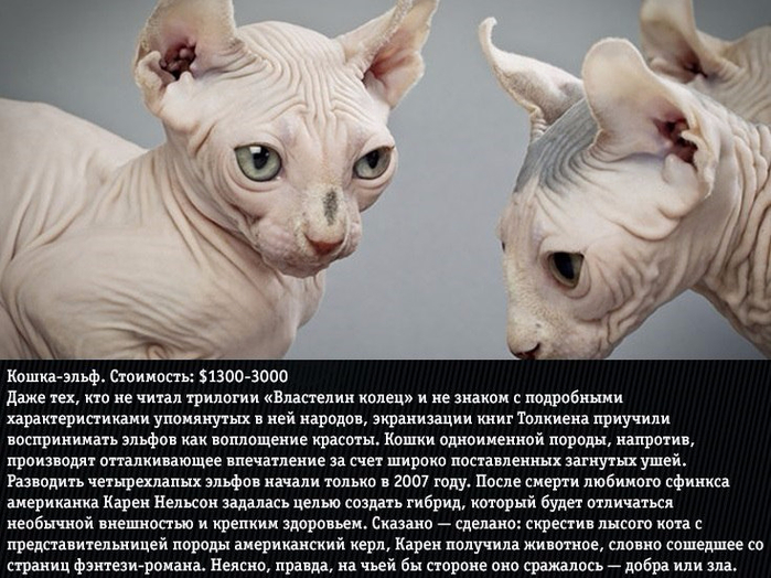 vONvnaW7Slo (700x524, 363Kb)