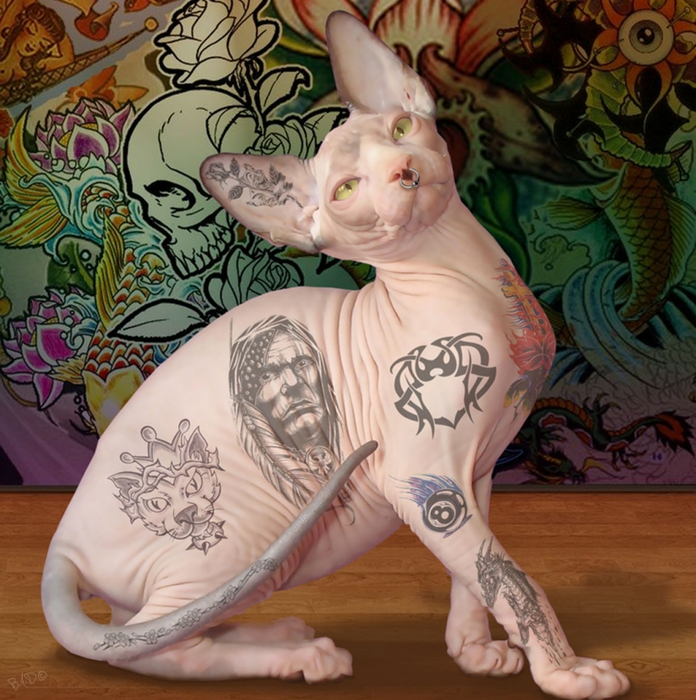 ������������� �����/3085196_tattoed_cat_by_bandit1966d4g3e16 (696x700, 363Kb)