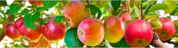 4593156_skinali_24_08_apples_on_tree605x165_1_ (605x165, 41Kb)
