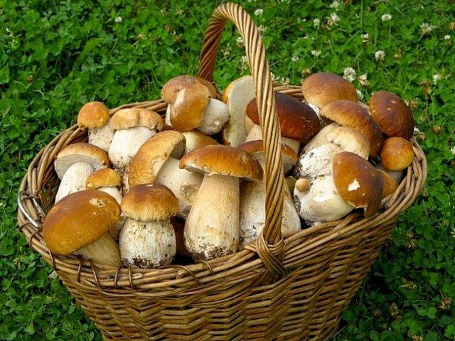 грибы картинки