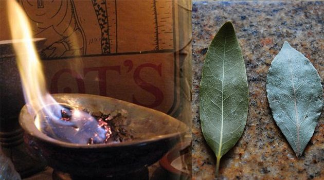 burn-bay-leaf-house-reason-youll-amazed (630x350, 50Kb)