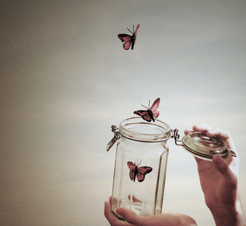 2222299_beautifulbutterfliesbutterflycolorscuteFavim_com136995 (500x459, 96Kb)