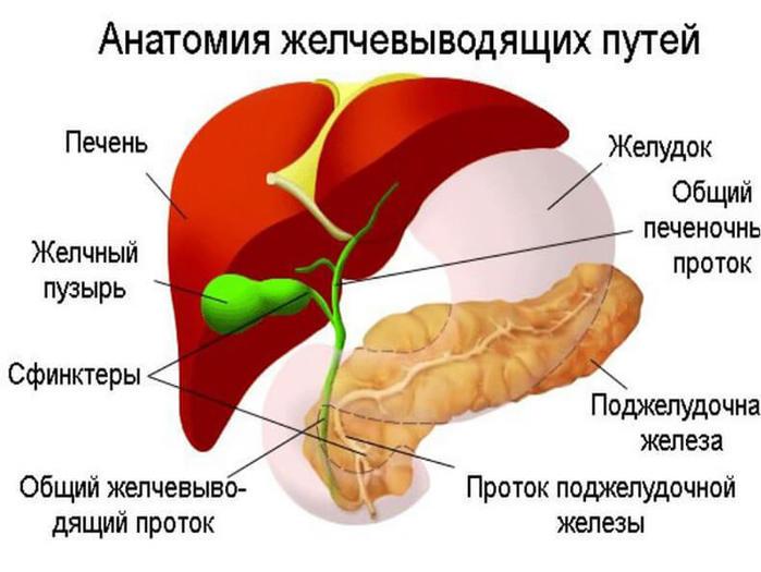Эффективные природные средства от застоя желчи (700x525, 51Kb)