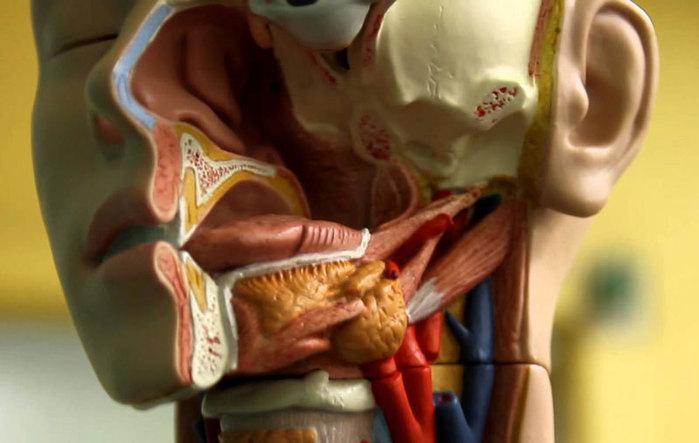 6 проблем в полости рта, за которыми скрываются другие заболевания (700x443, 56Kb)