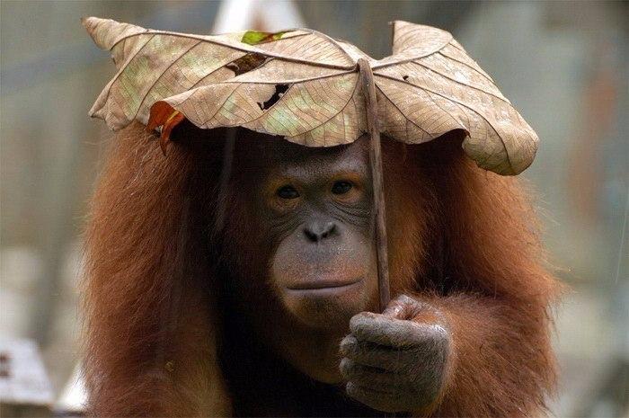 Животные и их природные зонтики (700x465, 272Kb)