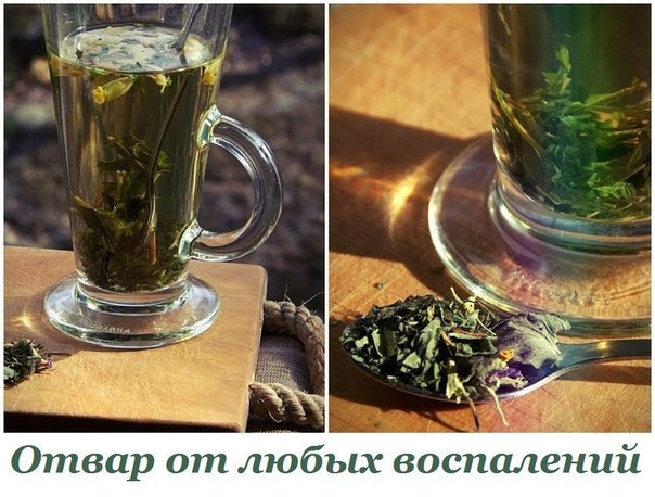 2749438_Otvar_ot_lubih_vospalenii (604x458, 79Kb)