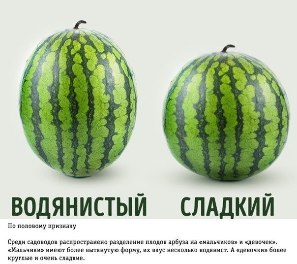 image (604x536, 130Kb)