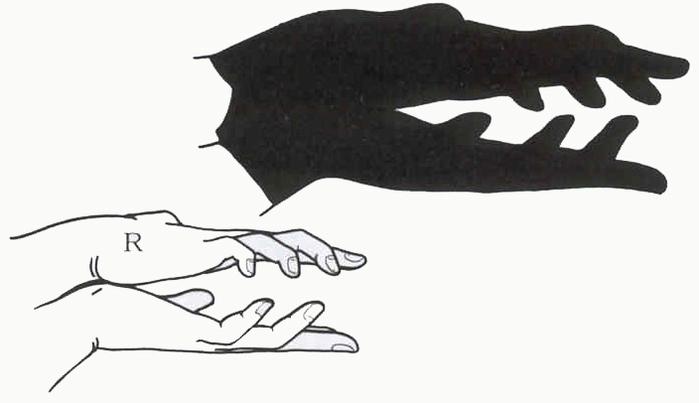Hand_alligator (700x403, 90Kb)