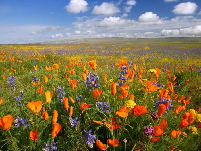 Фото красота полевых цветов
