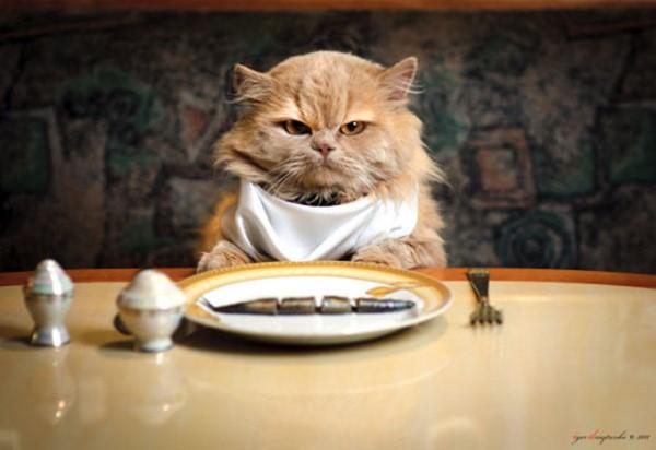 Сколько раз в день кормить кота?