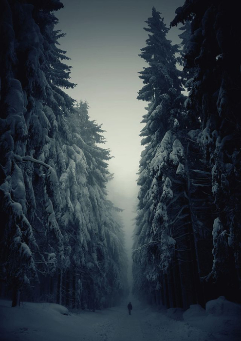 beautiful-mysterious-forests-1_880 (495x700, 268Kb)