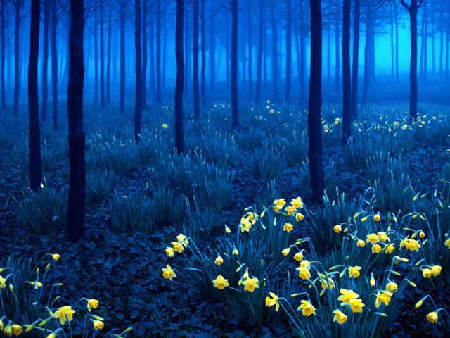 beautiful-mysterious-forests-3_880 (640x480, 398Kb)