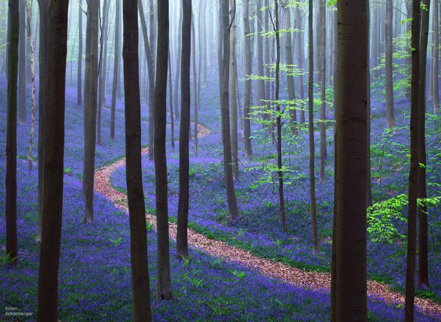 beautiful-mysterious-forests-8_880 (640x468, 340Kb)