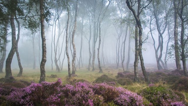 beautiful-mysterious-forests-10_880 (640x360, 213Kb)
