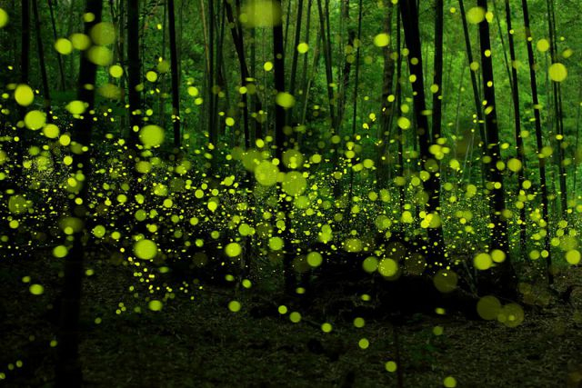 beautiful-mysterious-forests-12_880 (640x427, 358Kb)