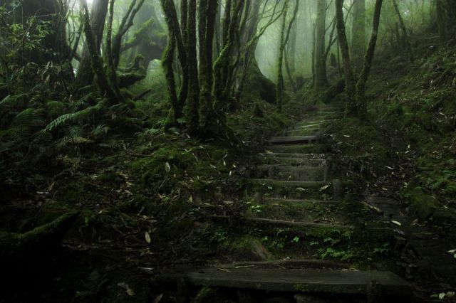 beautiful-mysterious-forests-17_880 (640x426, 204Kb)