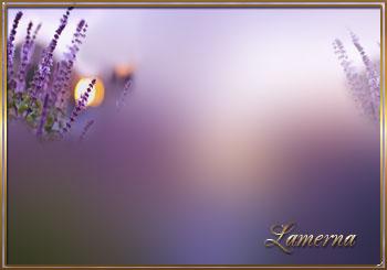 3166706_Lavender1 (350x245, 26Kb)