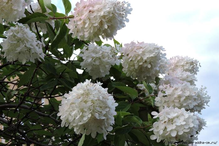 Спб, Ботанический сад (22) (700x466, 280Kb)