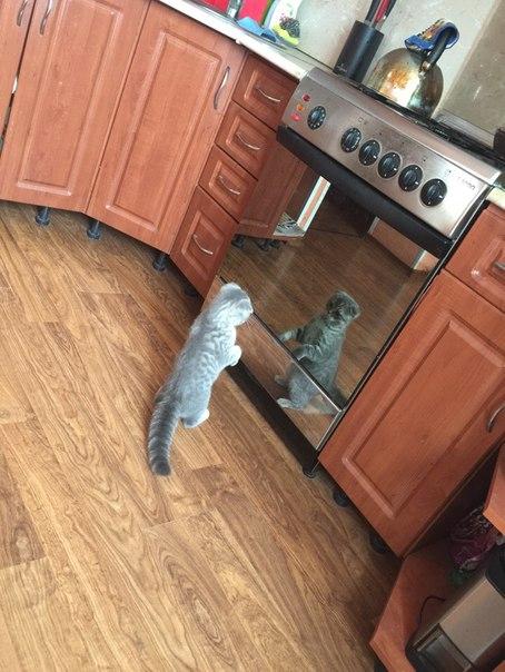 не могла пройти мимо - кот красавец (454x604, 235Kb)
