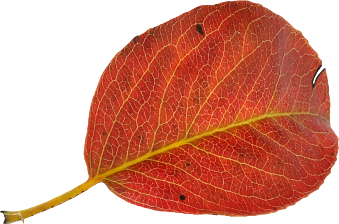 FanetteDesign_Foliage05 (700x461, 445Kb)