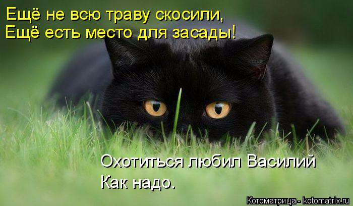 kotomatritsa_0 (700x408, 242Kb)