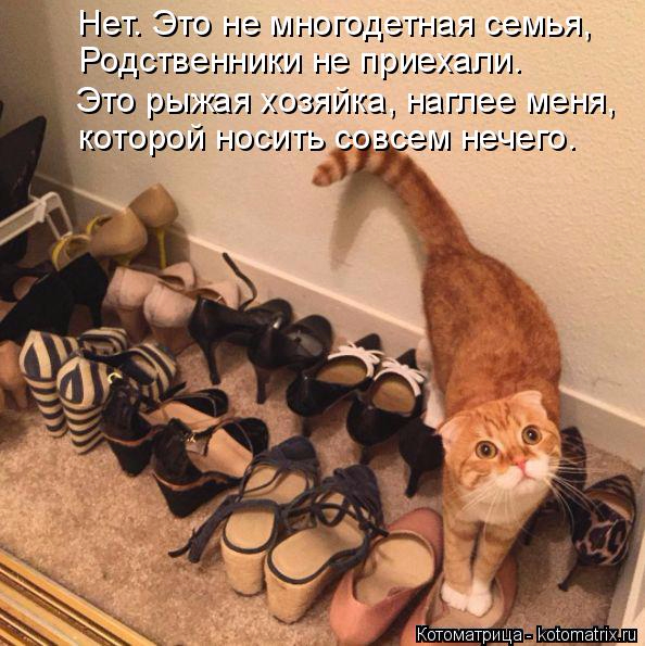 kotomatritsa_3R (594x595, 357Kb)