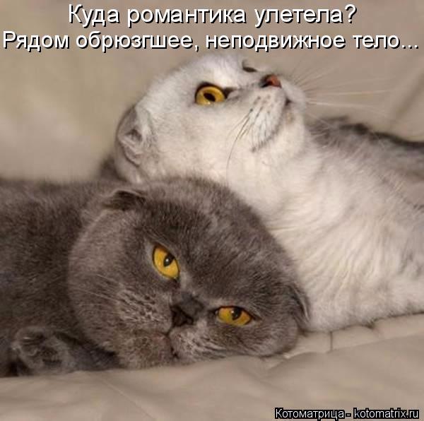 kotomatritsa_4y (600x596, 181Kb)