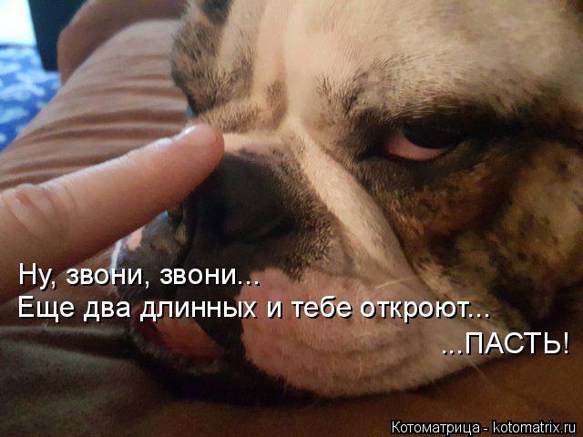 kotomatritsa_9 (640x480, 249Kb)