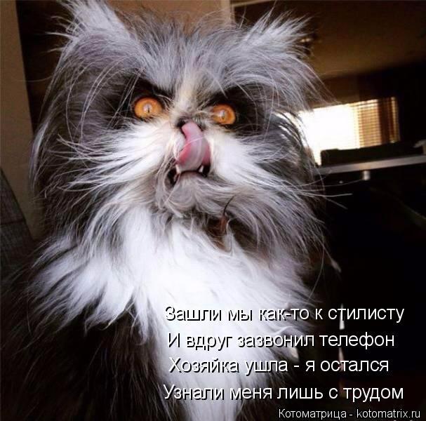 kotomatritsa_D6 (607x600, 249Kb)
