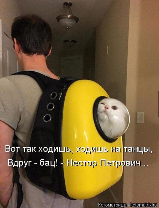 kotomatritsa_jG (536x700, 325Kb)