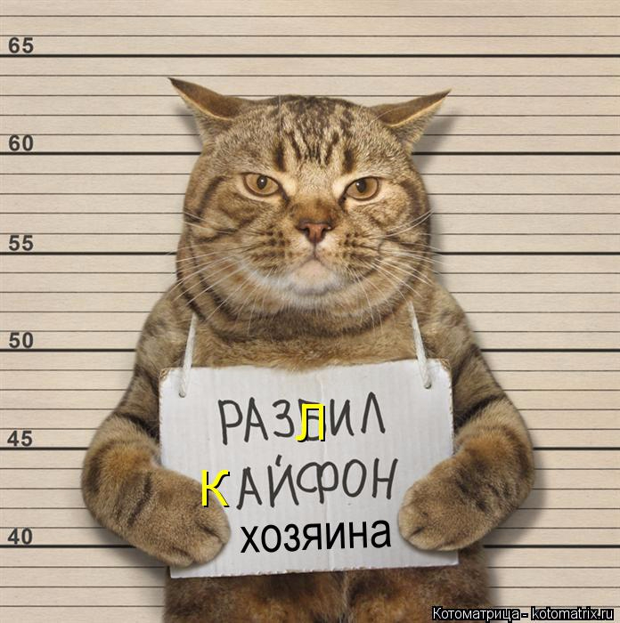 kotomatritsa_jr (696x700, 316Kb)
