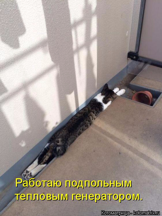 kotomatritsa_Ka (524x700, 312Kb)