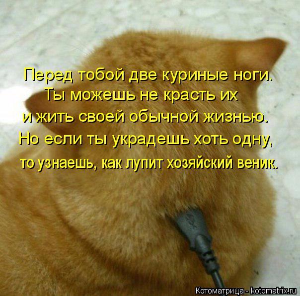 kotomatritsa_kw6 (604x596, 359Kb)