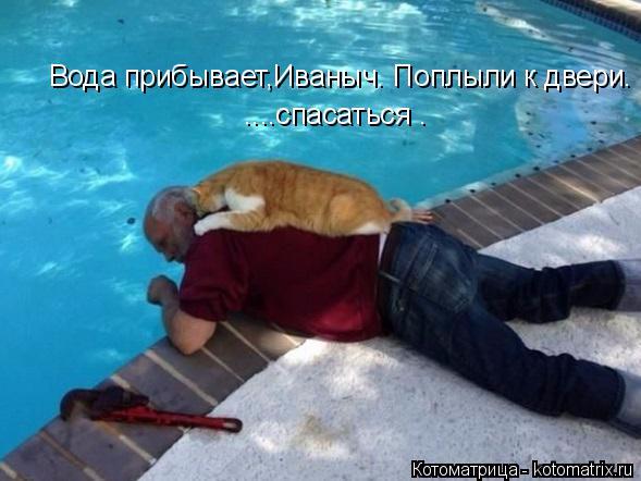 kotomatritsa_m (589x442, 210Kb)