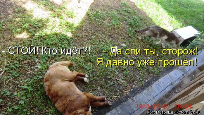 kotomatritsa_MU (700x393, 408Kb)