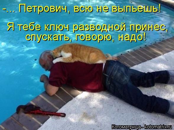 kotomatritsa_oP (589x442, 266Kb)