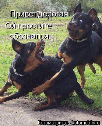 kotomatritsa_t (1) (335x411, 177Kb)