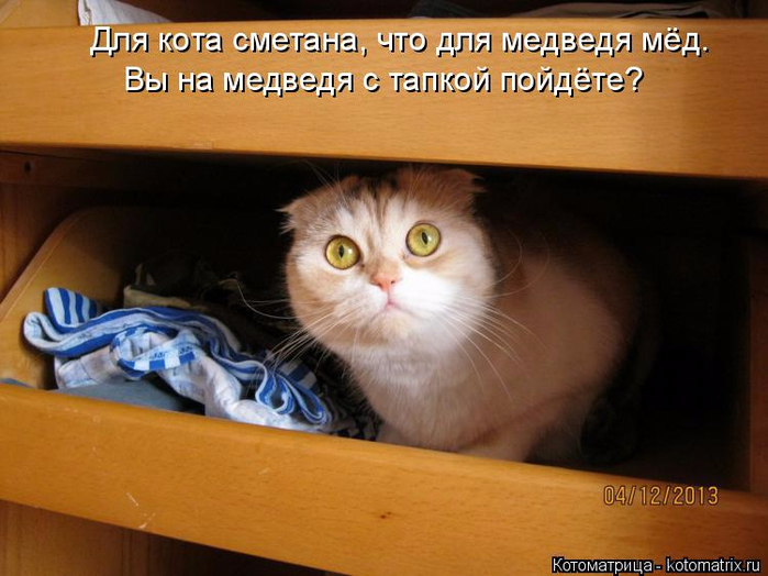 kotomatritsa_T (700x524, 333Kb)